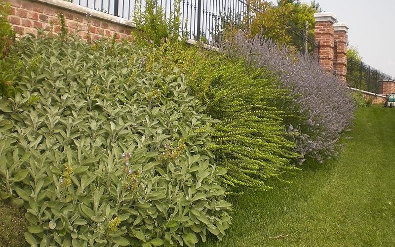 piante ornamentali per giardino cuneo