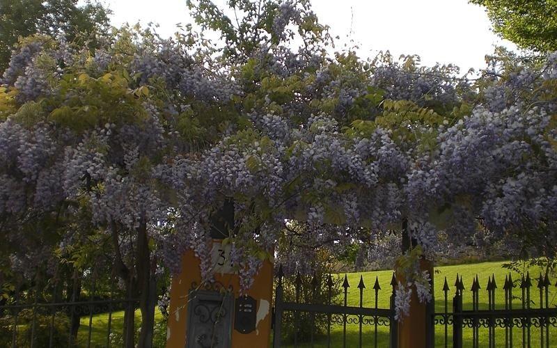 offerta piante ornamentali cuneo
