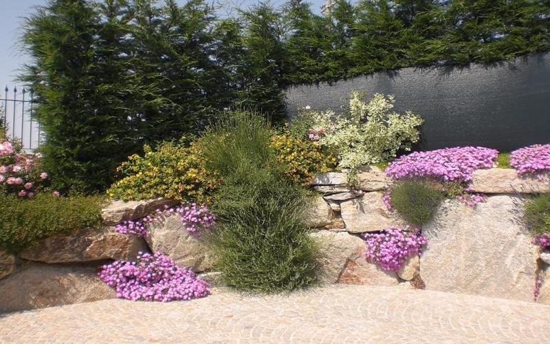 vendita piante da arredo cuneo