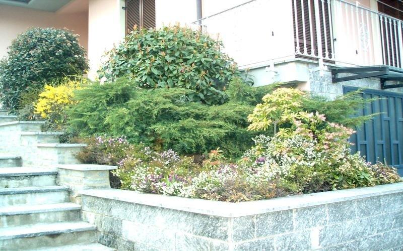 piante ornamentali da interno cuneo