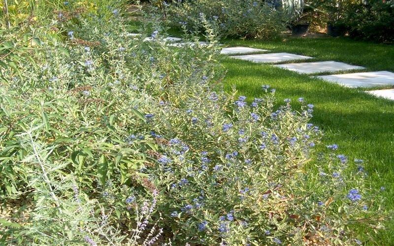 piante da arredo per giardino cuneo