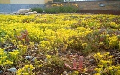 ditta giardinaggio cuneo