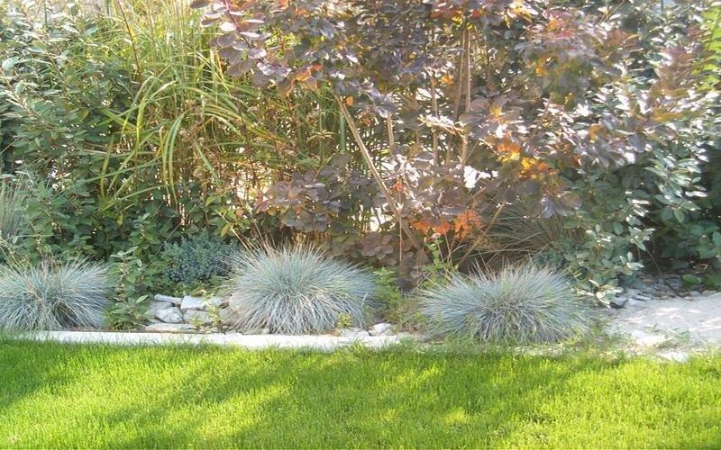piante da arredo cuneo