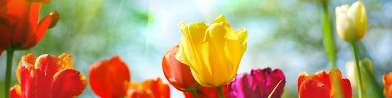 fiori_piante