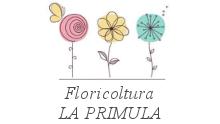la_primula_fiori