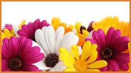 commercio di fiori