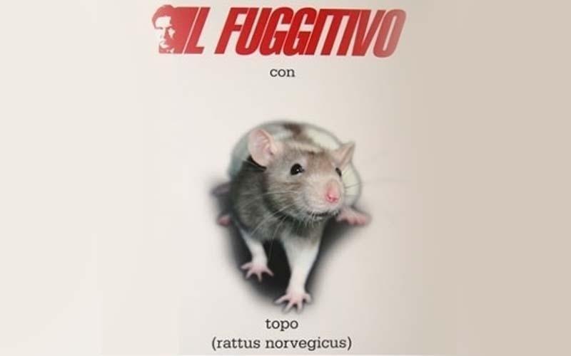 Il fuggitivo con topo