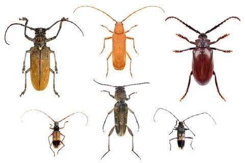 monitoraggio insetti derrate