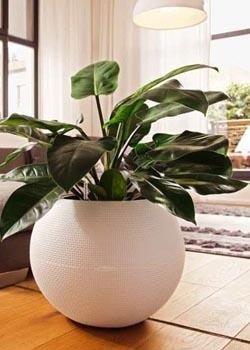 Vendita vasi pescara valpescara garden - Vasi da interno alti ...