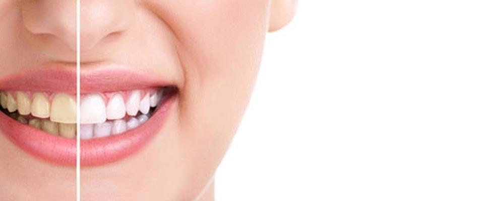 Servizi di parontologia