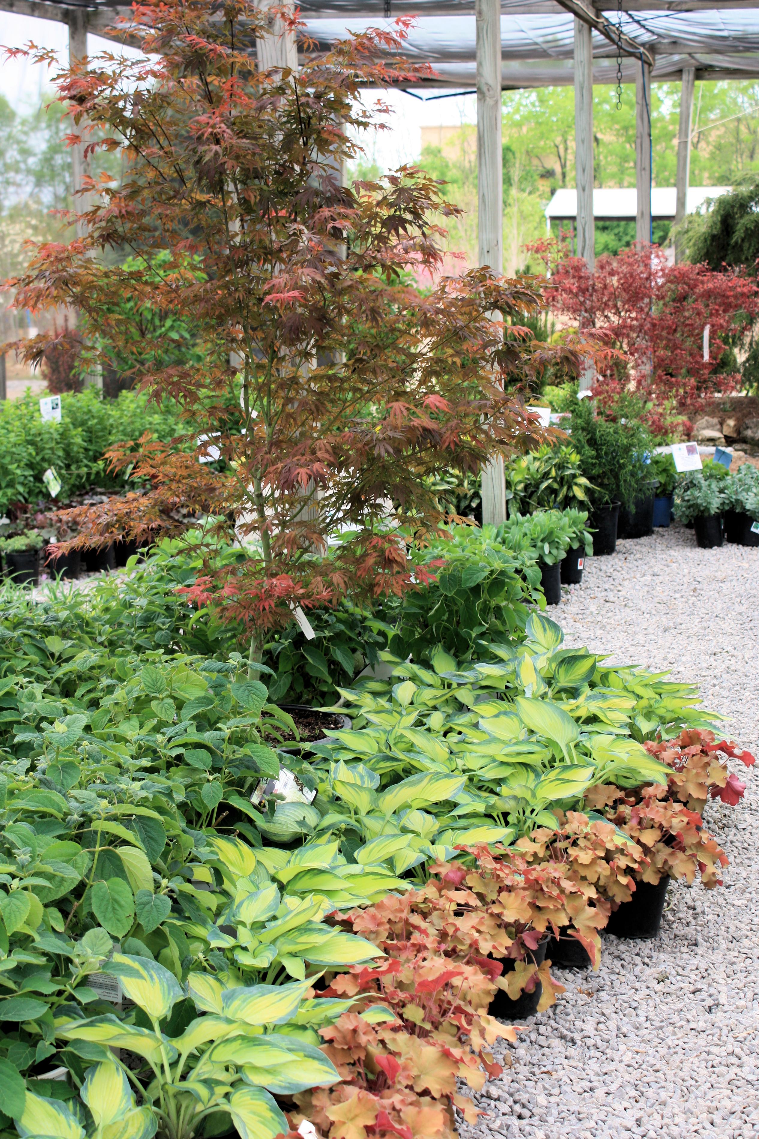 Garden Center & Tree Nursery in Nicholasville, KY | Glynn Young\'s