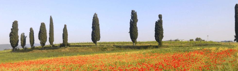 terreni edificabili
