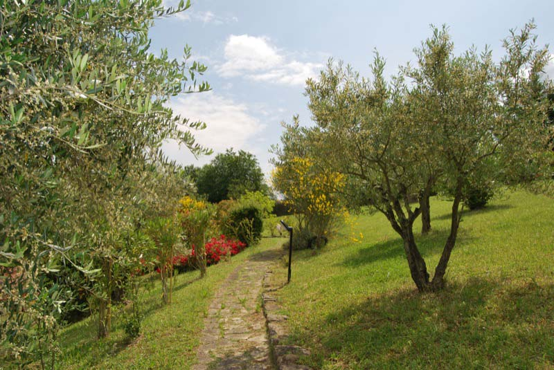 Alberi e piante nel parco a Ostra Vetere