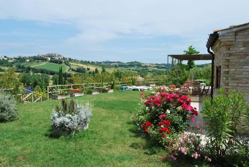 Piante con fiori nel giardino a Ostra Vetere