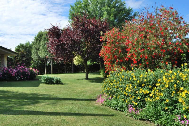 Giardino con le piante dei fiori a Ostra Vetere