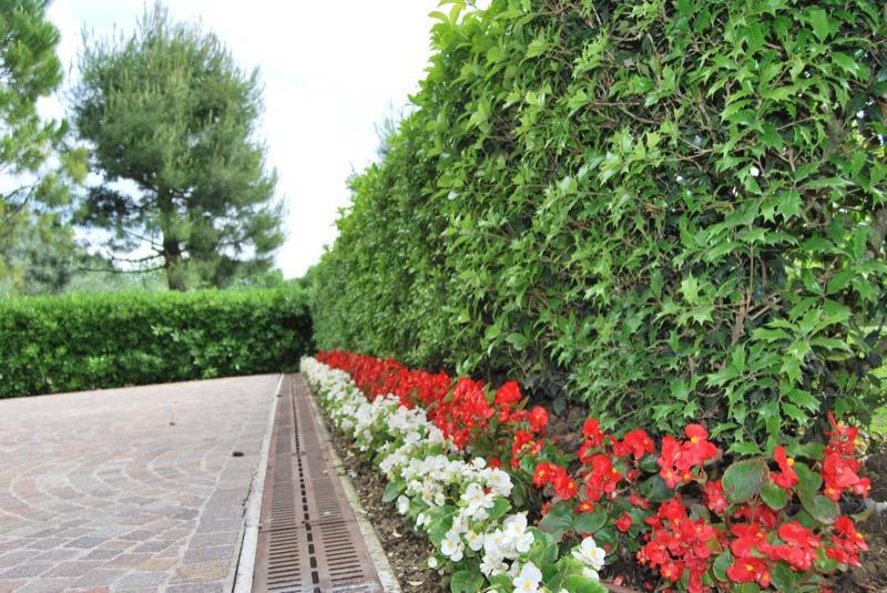 Piante dei fiori nel giardino di una casa a Ostra Vetere