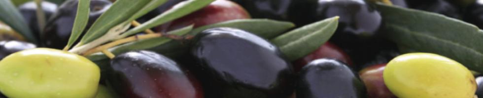 Olio extra vergine di oliva spremuto a freddo Toscano