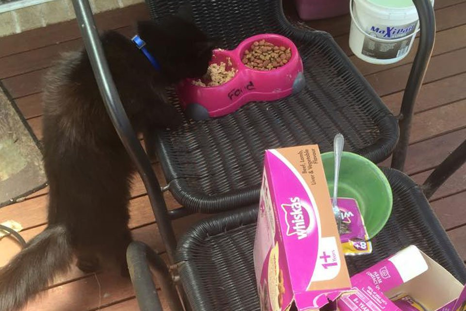 Minder Home and Pet