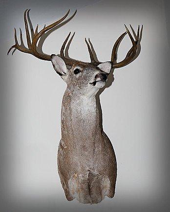 open range deer hunts san angelo tx