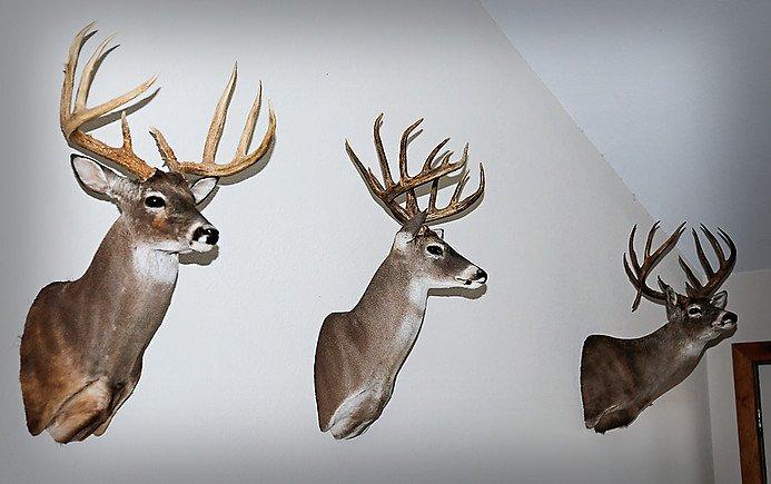 Whitetail deer hunts san angelo tx