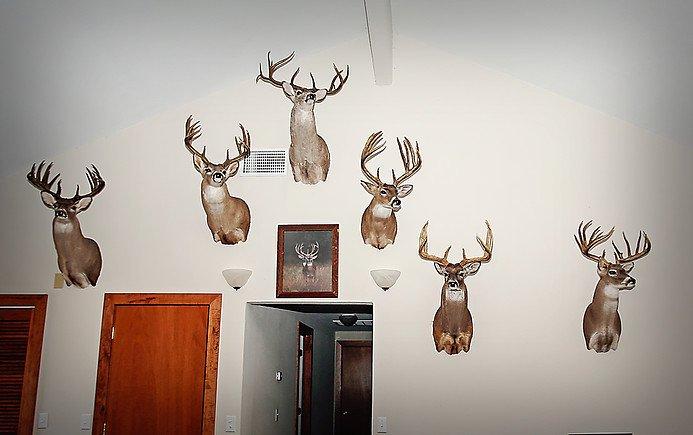 guided deer hunts san angelo tx