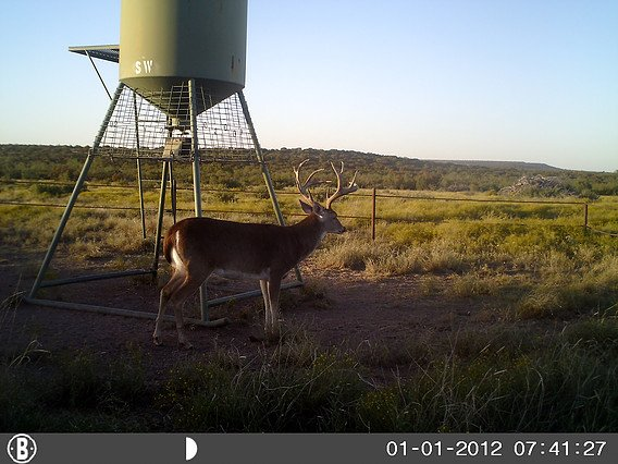 deer hunting san angelo tx