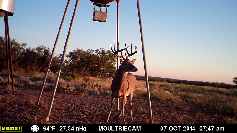guided deer hunts san angelo tx