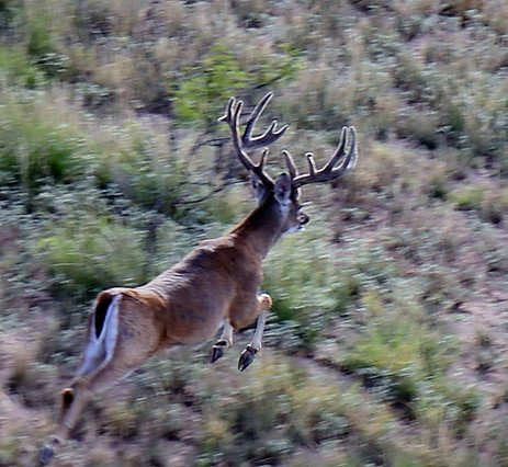 guided hunt camping san angelo tx