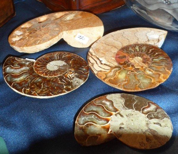 fermacarte ammonite del madagascar