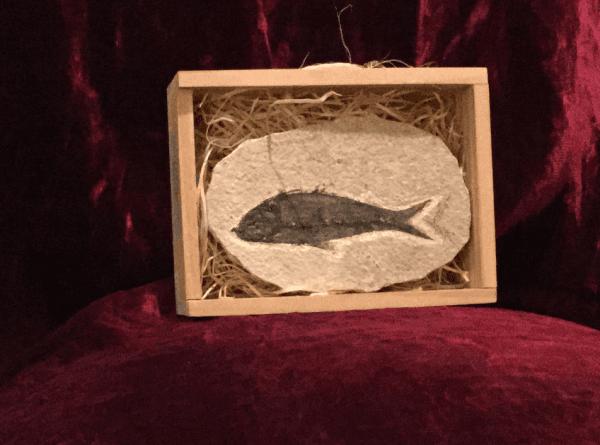 Fermacarte fossile