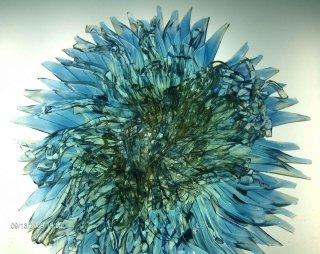 riccio di mare vetro