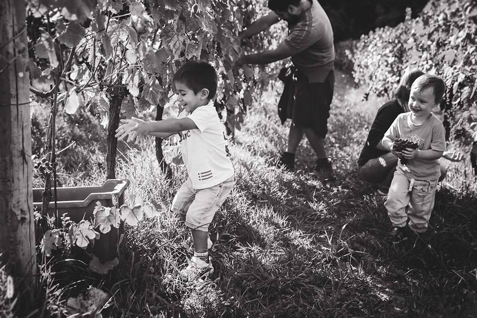 bambini raccolgono l'uva in giardino