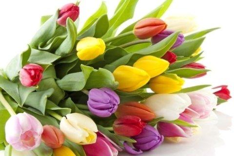 vendita tulipani