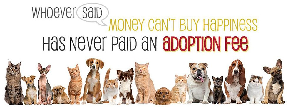 Adoption Fee, Dogs, Cats, Kennels, Small Animal Care, Large Animal Care, Kittens, Puppies, Vet, Veternarian