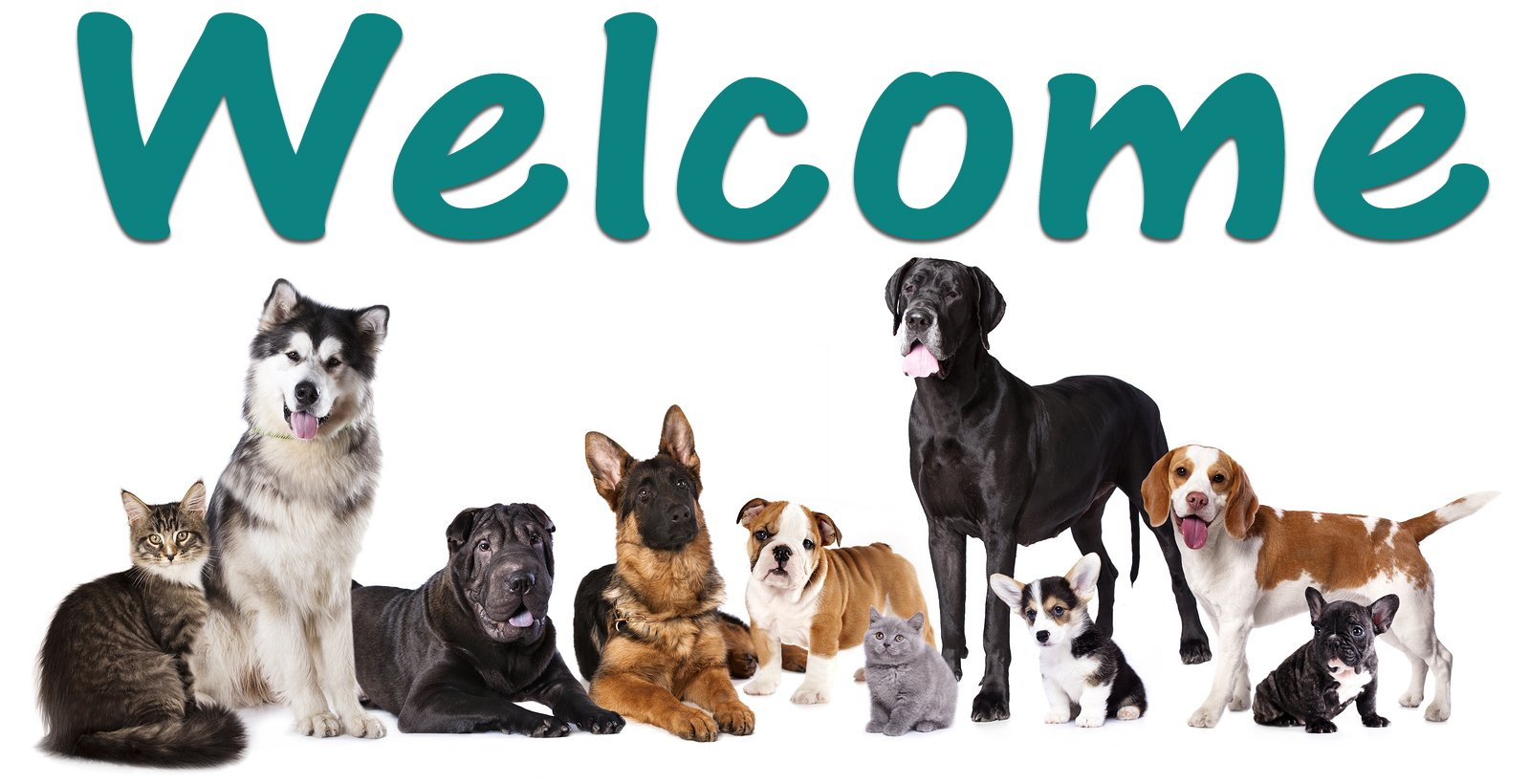 Dogs, Puppy, puppies, Cats, Kittens, Pets, Small Pets, Pet Care, Large Animal Care, Small Animal Care