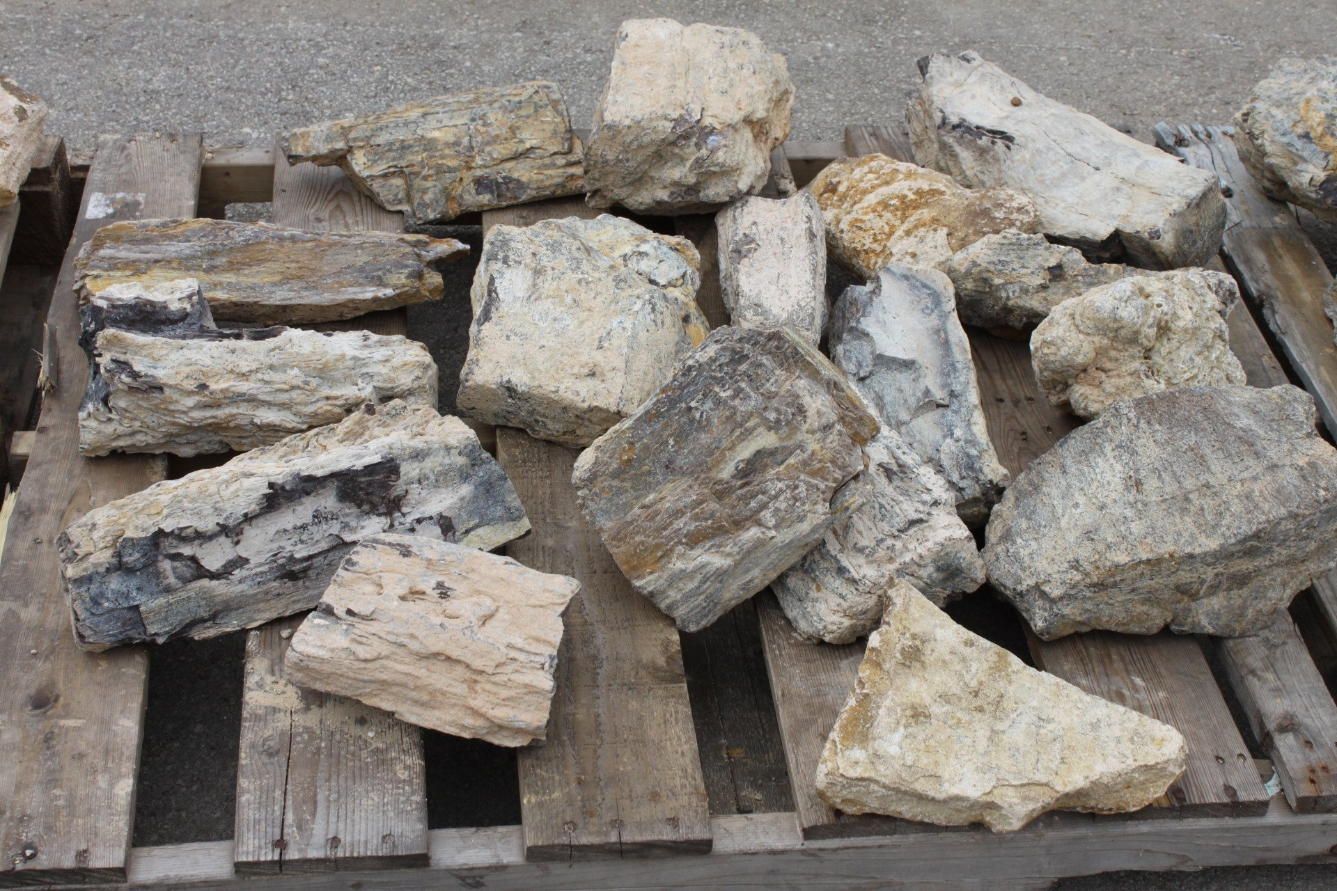 Petrified Wood Aquarium Supplies In San Antonio Texas