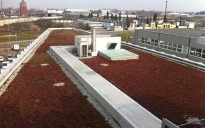 tetto ecologico