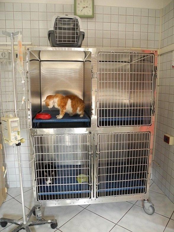 gabbie per animali con gatto che si accinge a bere