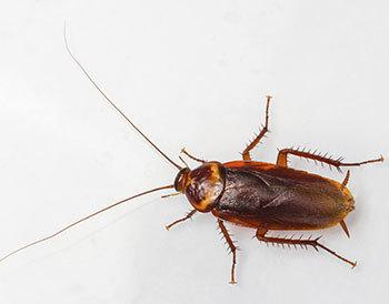 cockroach control Pensacola, FL