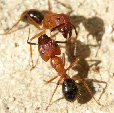 ant control Pensacola, FL