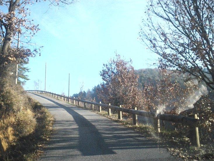 una strada di collina con degli alberi e un guard rail in legno