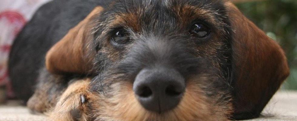 pensioni per animali