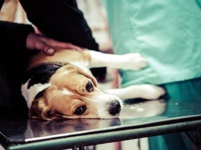 prestazioni mediche veterinario