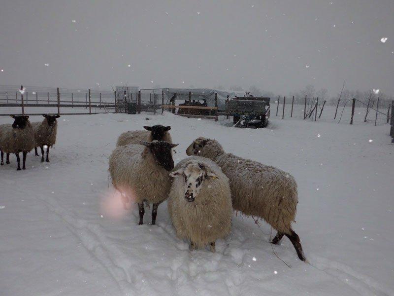 L'inverno é giunto