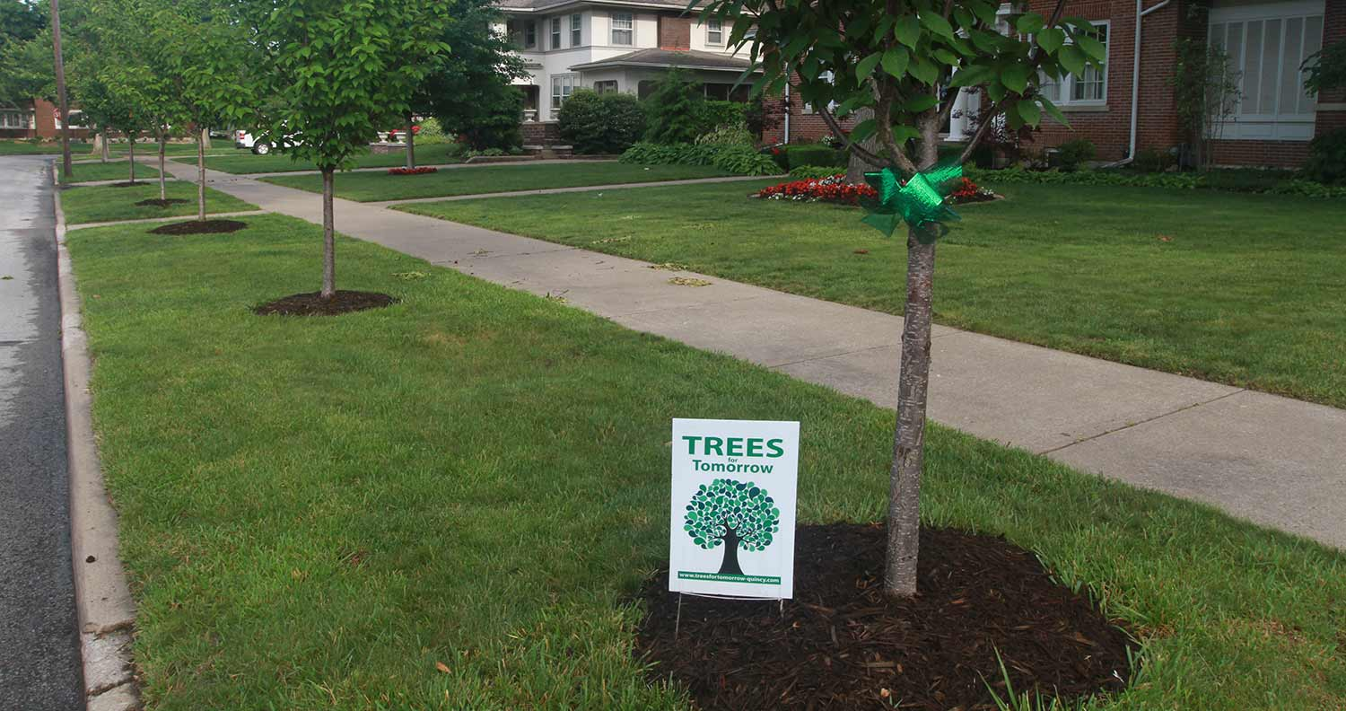 Trees for Tomorrow Canopy - Quincy, IL