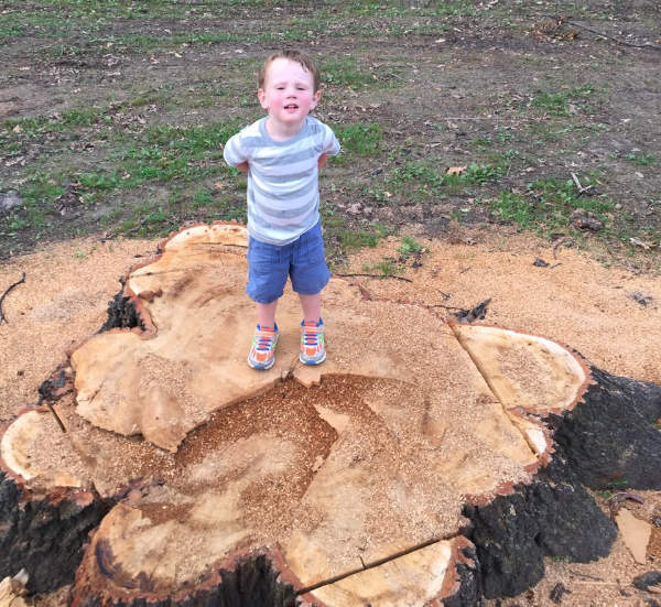 Replace trees damaged by Quincy storms