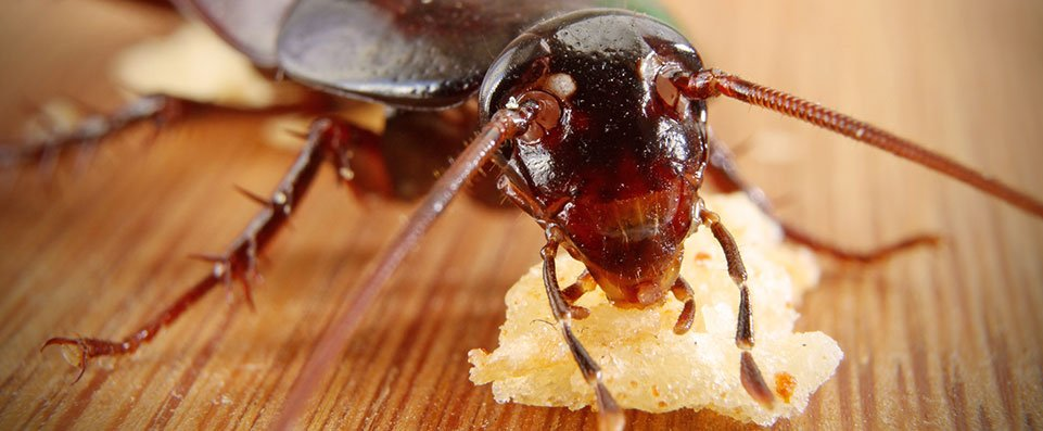 Pest eradication