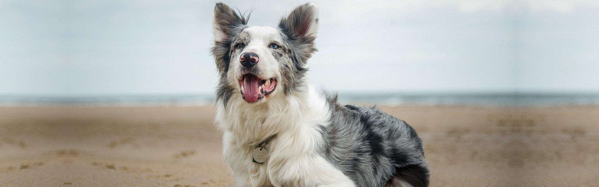 dog in a beach