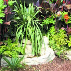 Feature planting