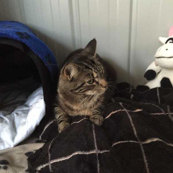Cattery In Geelong